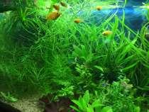 Набор растений в аквариум, в Москве