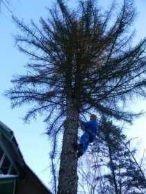Убрать дерево в Раменском, Кратово, Быково, Удельной, Жуковском, в Раменское