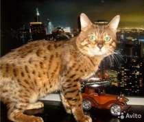 Бенгальские котята окрасы минк и розетка на золоте, в Смоленске