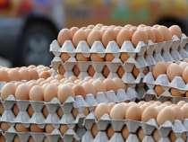 Яйцо куриное, в г.Ессентуки