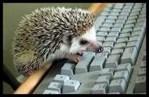 Требуется сотрудник для работы в интернете!, в Уфе