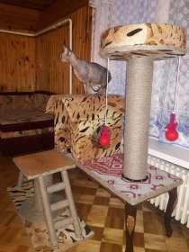 Игровой комплекс для кошек, в г.Могилёв