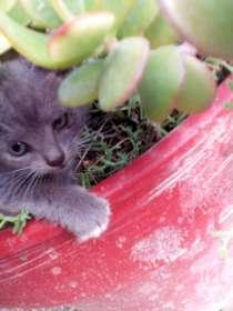 Отдам котят в добрые руки, интересной окраски(мальчики), в г.Таррагона