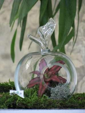 Флорариум - эксклюзивный подарок