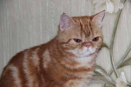 Котенок-зкзот