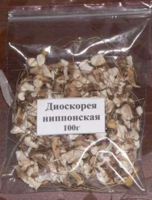 Диоскорея (семена, саженцы, сухие корни)