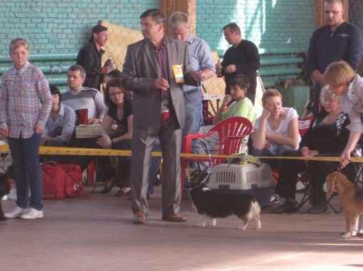 Ищу щенков вельш корги пемброк и предлогаю на обмен щенка