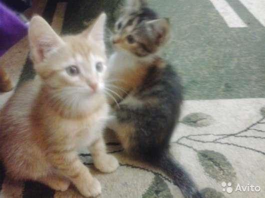 Милых котят в добрые руки (Девяткино)
