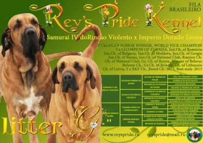 Фила бразилейро щенки