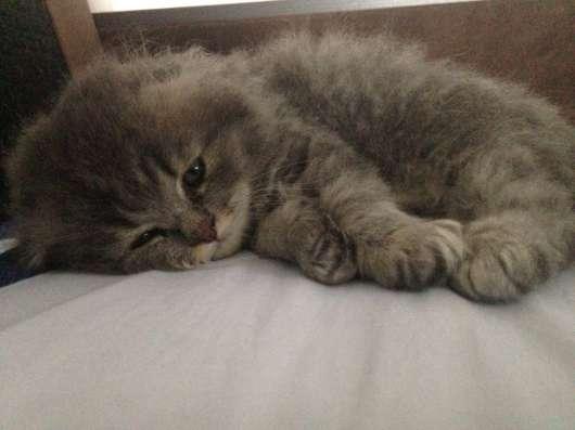Отдам котят в хорошие руки ❤️ в Воронеже Фото 3