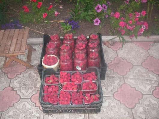 Саженцы малины в Курске Фото 1
