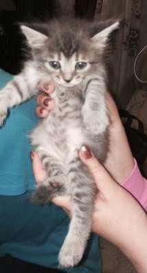 Отдам даром котята в Краснодаре Фото 2