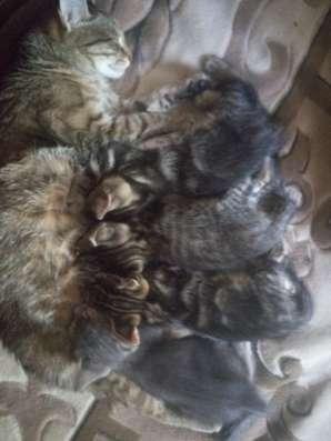 Раздаю котят от кошки -мышиловки. На мордочке буква М