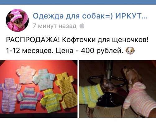 Одежда той-терьер собака щенок в Иркутске Фото 3
