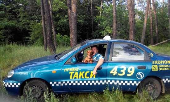 Такси для животных в г. Днепропетровск Фото 6