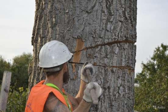 Спилить, удалить дерево в Щелково, Щелковском районе Фото 3