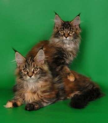 Кошки и котята в Москве Фото 3