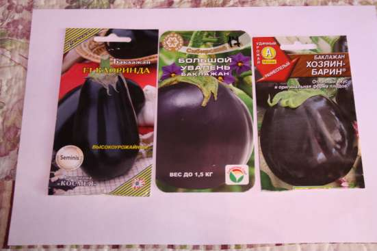 Рассада помидор, перца, баклажан, клубники