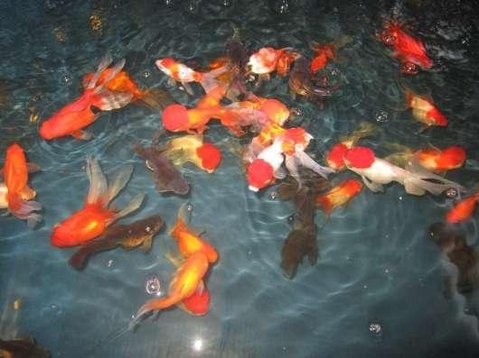 Продаж акваріумістика