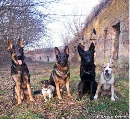 Коррекция нежелательного поведения собак