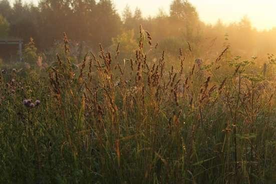 Фирменные травосмеси для сенокосов и пастбищ