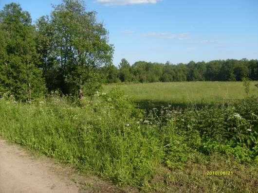 4.1 га земли сельхоз.назначения в 10 км от Углича Яросл. обл Фото 2