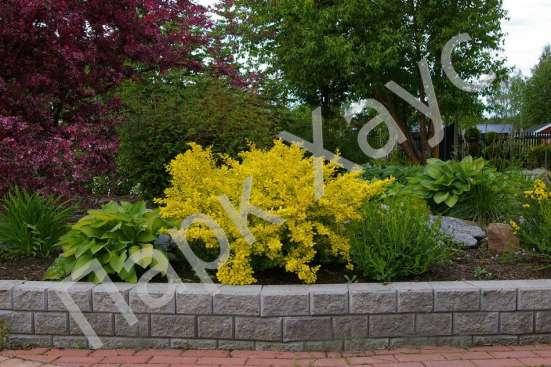 Хвойные, лиственные, плодовые деревья и кустарники, цветы
