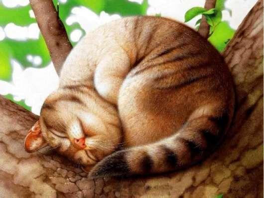Стерилизация кошек на дому, недорого