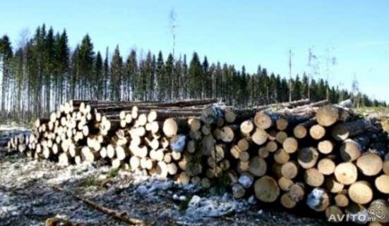Лес на корню в Калуге Фото 2