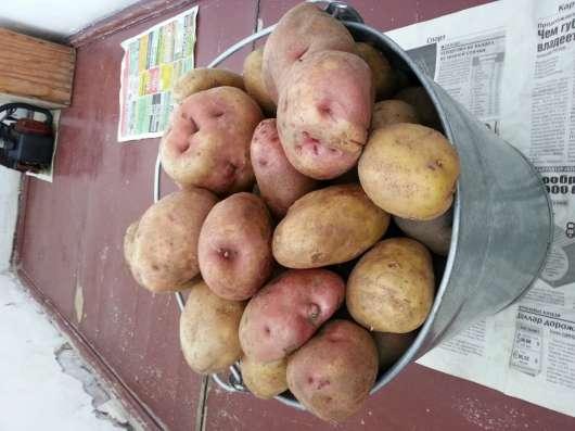 Экологически чистый картофель