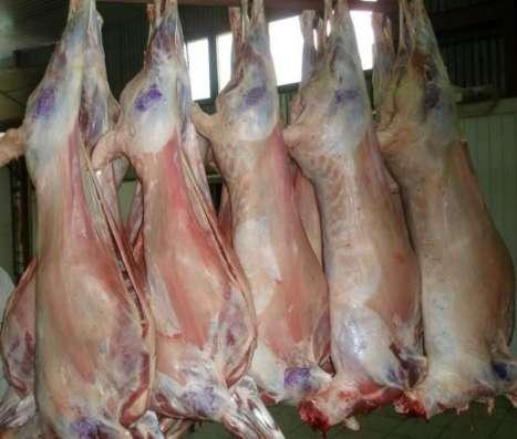 Мясо баранины оптом прямо от производителя с отличной ценой…