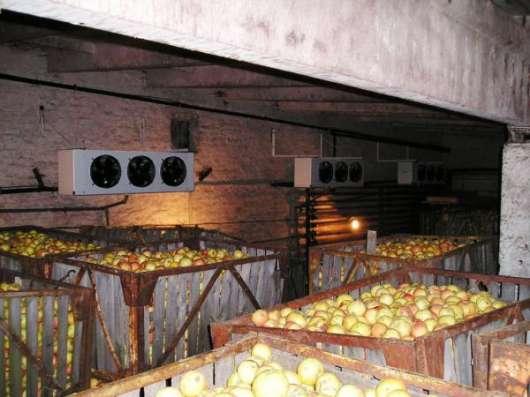 Монтаж холодильных камер для хранения яблок в Крыму. в г. Симферополь Фото 3
