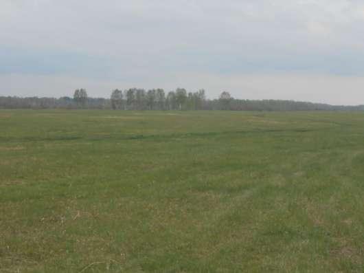Продам большой участок 116 га у Кудряшовского бора