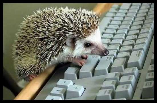 Требуется сотрудник для работы в интернете!
