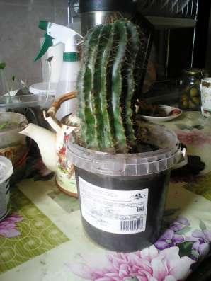 Продаю кактусы. От маленьких до больших