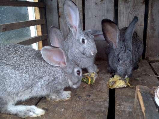 Крольчата мясной породы в Нижнем Тагиле Фото 2
