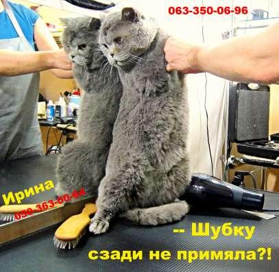 """""""Тюнинг"""" котов и кошек. Оставьте хлопоты профессионалам!"""